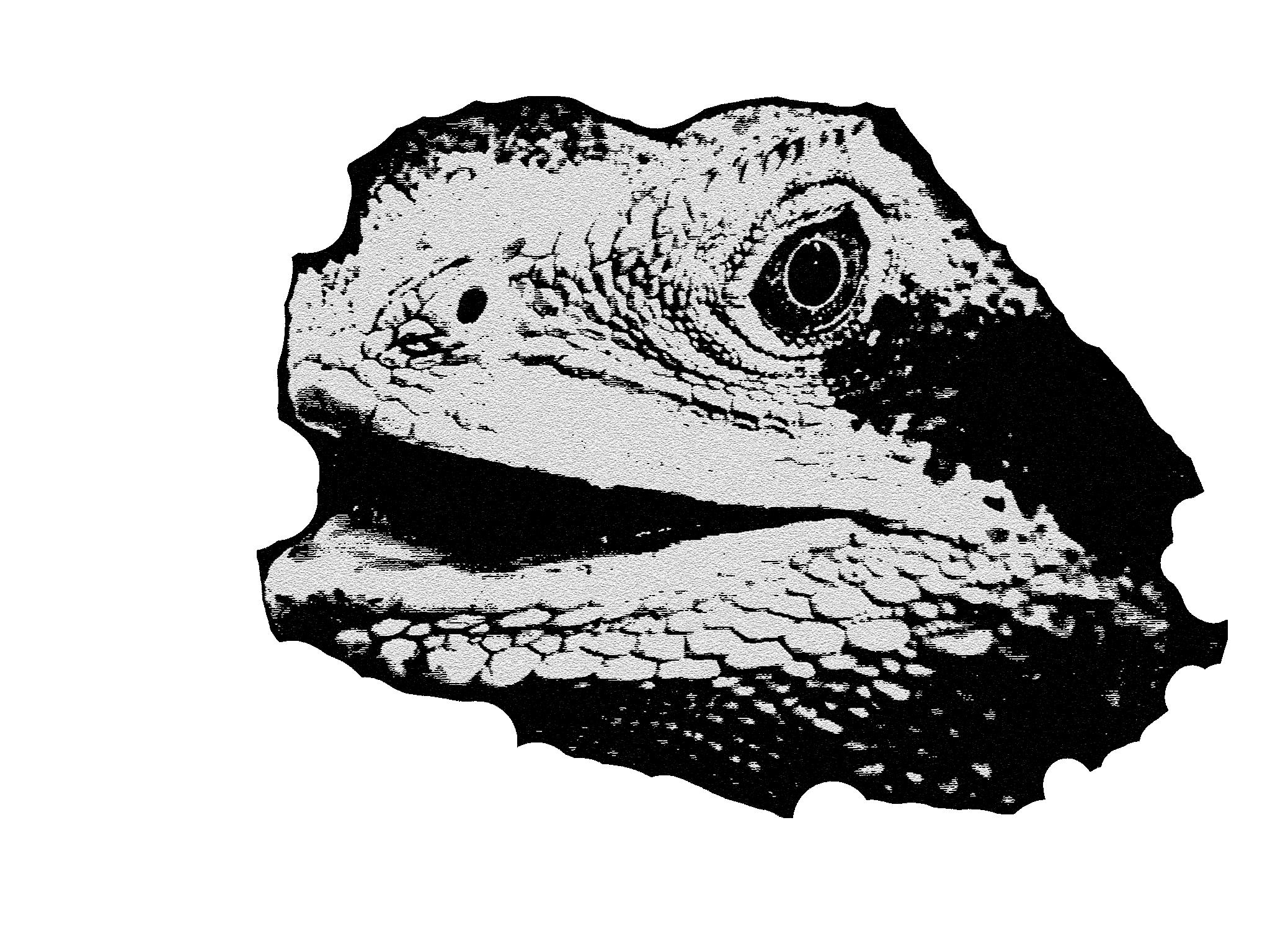 el lagarto en silueta tenue