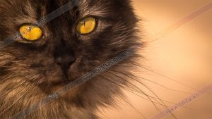Foto de stock - Photo Stock - Xana la gata
