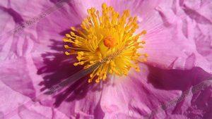 Foto de stock - Photo Stock - macro de una flor