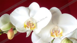 Foto de stock - Photo Stock - Ramillete de orquideas