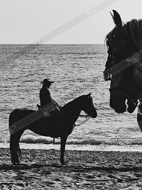 Foto de stock - Photo Stock - Jinete en silueta en la playa con cabeza de caballo en primer plano blanco y negro
