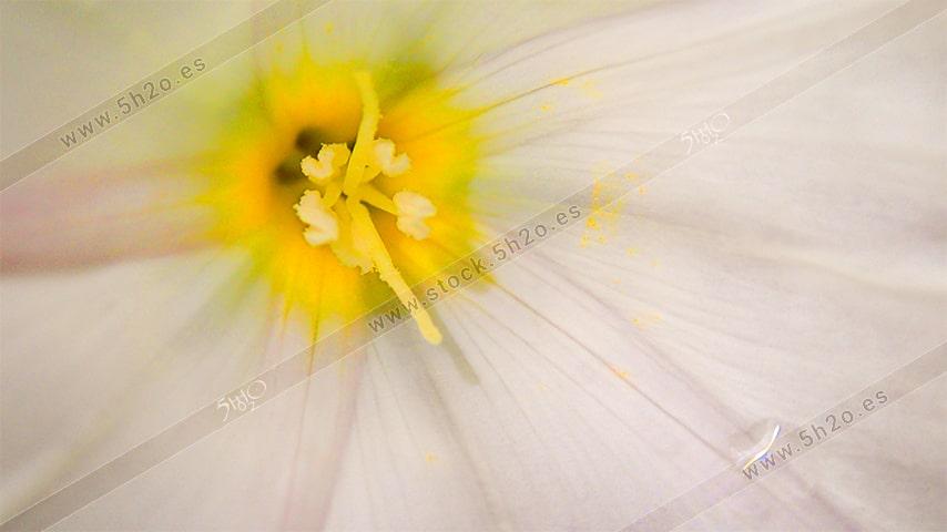 Foto de stock - Photo Stock - Macro fotografía de el centro de una flor