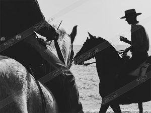 jinetes andaluces en silueta de blanco y negro