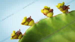 Foto de stock - Photo Stock - Brotes nuevos de un cactus