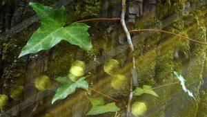 Foto de stock - Photo Stock - Reflejos verdes en enredadera