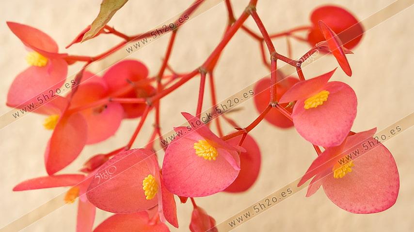 Foto de stock - Photo Stock - Ramillete de flores