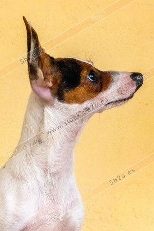 Foto de stock - Photo Stock - Una perrita posando de perfil
