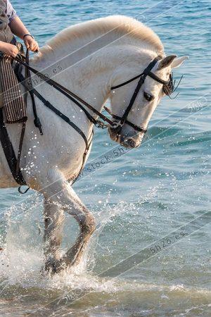 Foto de stock - Photo Stock - Caballo salpìcando sobre la orilla del mar