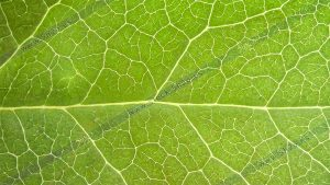 Foto de stock - Photo Stock - Macro foto de una hoja