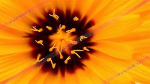 Foto de stock - Photo Stock - Macro fotografía del centro de una flor