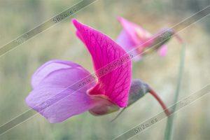 Macro fotografía de una flor