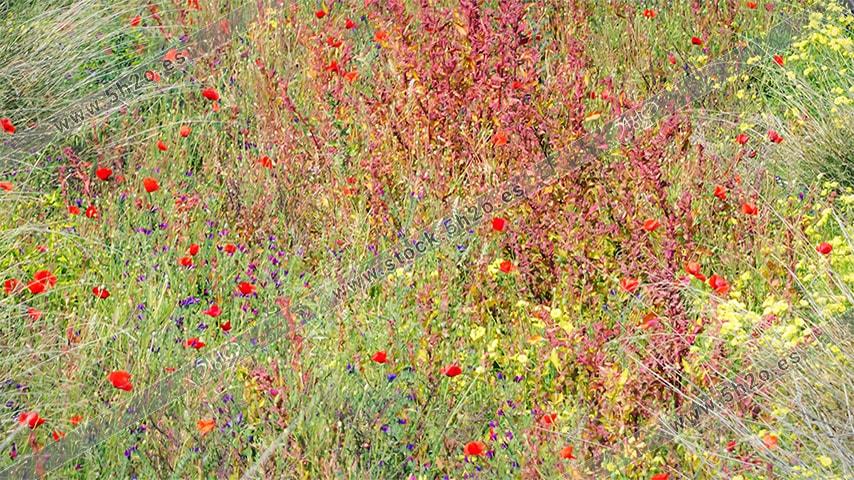 Foto de stock - Photo Stock - Flores en el campo