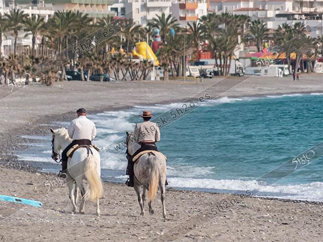 Foto de stock – Photo Stock by 5h2o – Cabeza de un caballo canelo con un fondo marino desenfocado con efecto bokeh