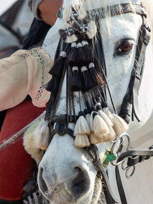 Foto de stock – Photo Stock by 5h2o – Caballo enjaezado, detalle de la cabeza