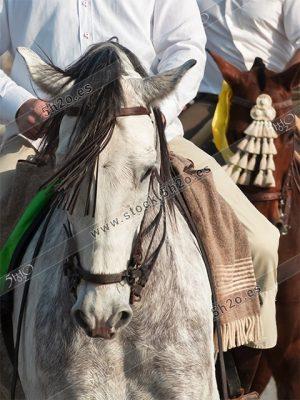 Foto de stock – Photo Stock by 5h2o – Dos caballos enjaezados, uno blanco y otro marron, avanzando de frente y enmarcadas sus cabezas