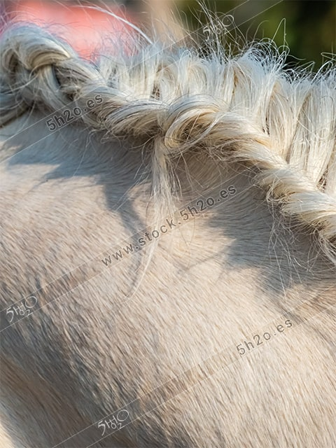 Foto de stock – Photo Stock by 5h2o – Primer plano de unas crines de caballo trenzadas