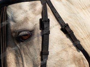 Foto de stock – Photo Stock by 5h2o – Primer plano de el ojo de un caballo enmarcado entre las cintas del arnes