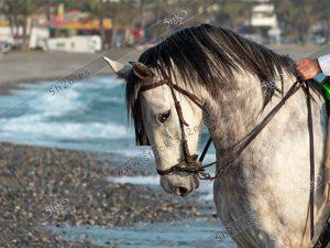 Foto de stock – Photo Stock by 5h2o – Cabeza de caballo sobre un fondo de marino desenfocado